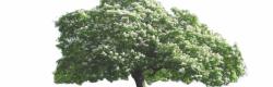 Vue en élévation, le banc autour de l'arbre